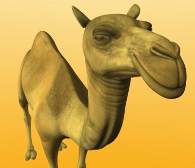 3d camel camel-v2 model