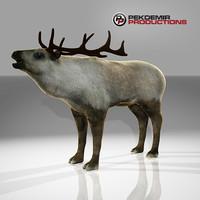 Reindeer V2