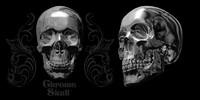 chrome skull 3d c4d