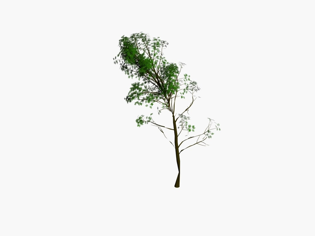 tree pack max