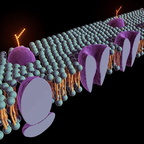 membrane proteins lipid 3d ma