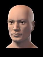 3d model generic head