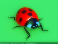 lady beetle 3d ma