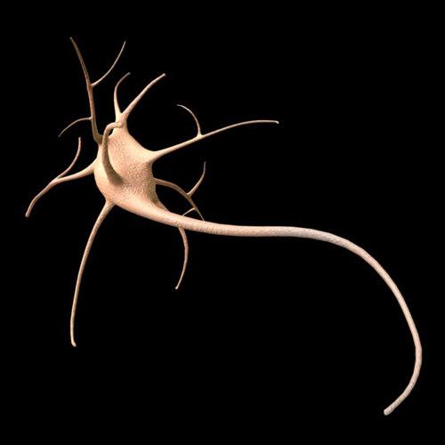 3d neuron synapse model
