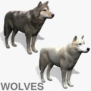 wolves wolf 3d model