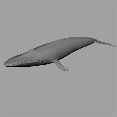 obj blue whale