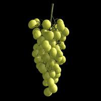grape model