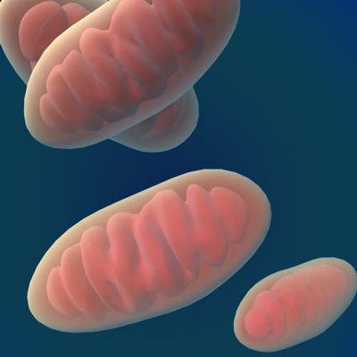 3d mitochondria cellular