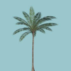 3d model palm palma