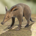 Aardvark 3D models