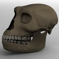 3dsmax australopithecus afarensis skull