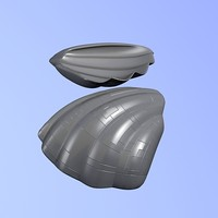 cockleshell 3d model