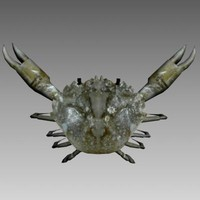 crab screensavers 3d model