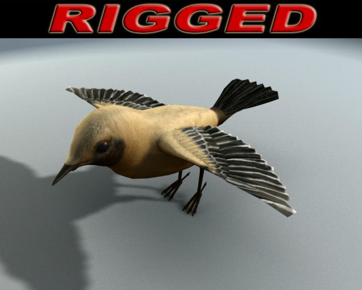 3d model desert wheater bird