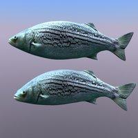 pesciolino