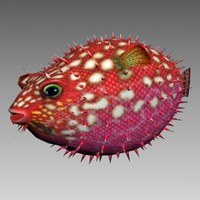 Hedgehog Fish animated
