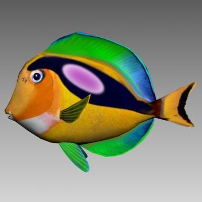 surgeon fish 3d obj
