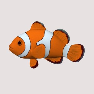 anemonefish clown 3d model