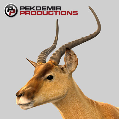 3d impala antelope