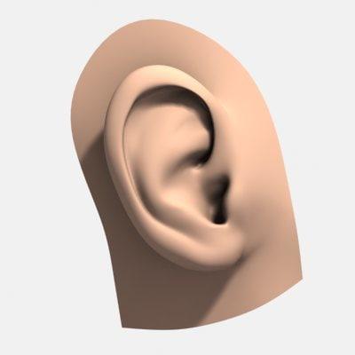 realistic human ear 3d model
