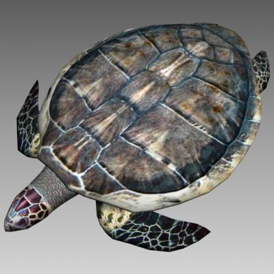 3ds max sea turtle