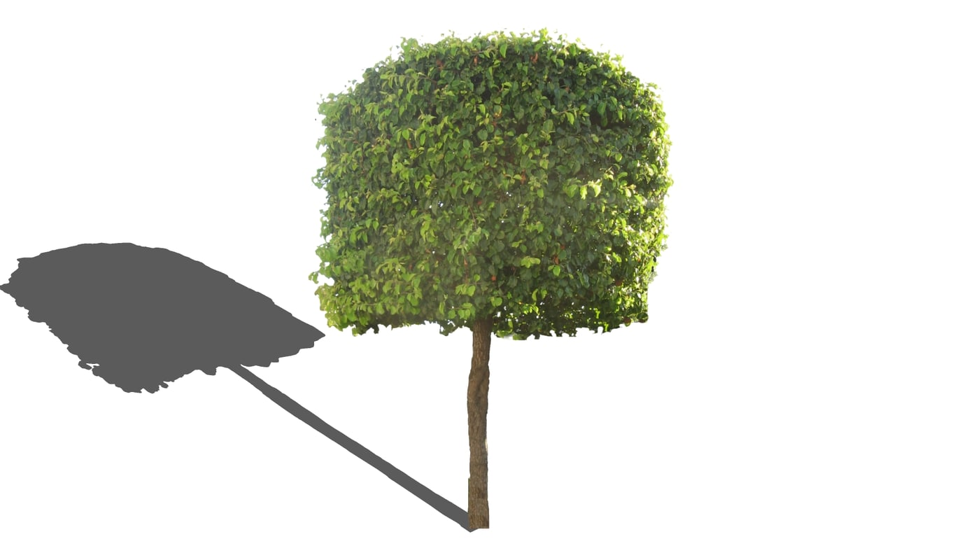 3d model groomed tree