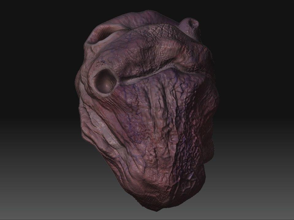3d human heart zipped model