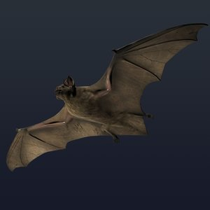 3d model vampire bat