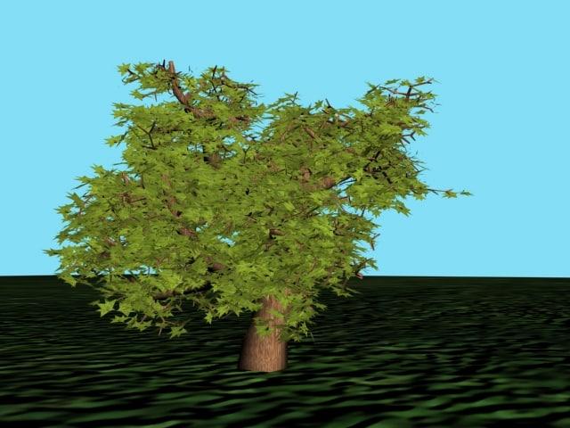 3d tree seeds