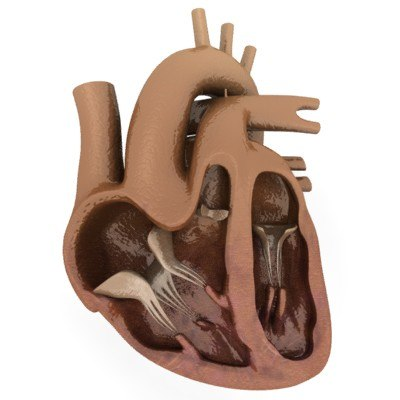 dxf heart section