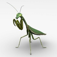 praying mantis 3d max