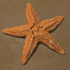 starfish sand obj