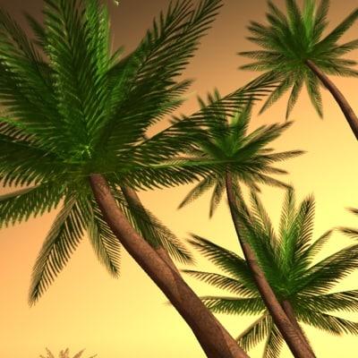 palm beach max