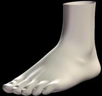 realistic foot 3d model