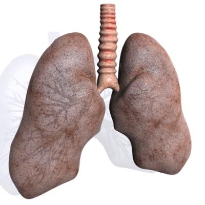 3d model lung