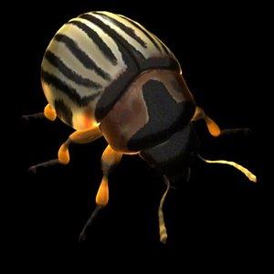 3d model leptinotarsa potato beetle bug