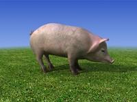 3d pig pork model