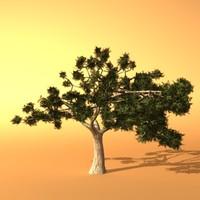 Australia trees