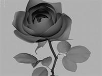 rose flower 3d ma