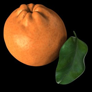 orange fruits 3d c4d