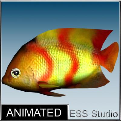 tropical fish max