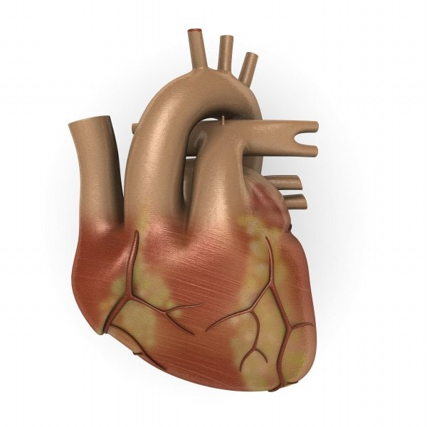 3ds human heart