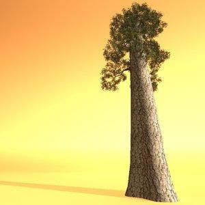 wood redwood ma