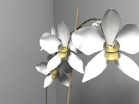 orchid.max