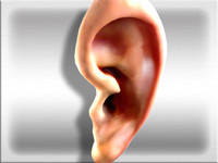 photorealistic human ear obj