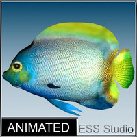 3d tropical fish 12