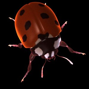 3d model coccinella ladybug