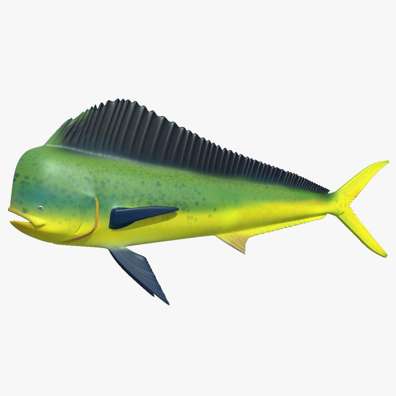 Ma mahi dolphin fish for Mahi mahi fish