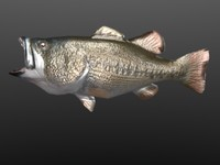 bass fish.3ds