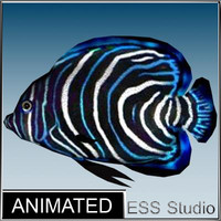 tropical fish 7 3d model